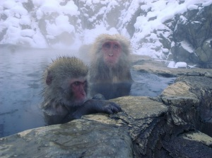 snow monkeys in japan with readyclickandgo, private day tours in japan, private day trips in japan